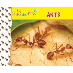 1-2-3, do, re, mi  ANTS