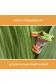 ¿A quién le tiene miedo la rana? Who is a Frog Afraid of?