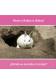 ¿Dónde se esconde el conejo? Where a Rabbit is Hiding?