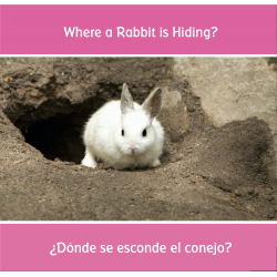 ¿Dónde se esconde el conejo? Where a Rabbit is Hiding?