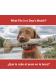 ¿Qué le cabe al perro en la boca?
