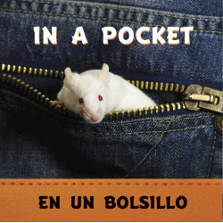 In a Pocket / En un bolsillo