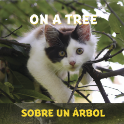 On a Tree / Sobre un árbol