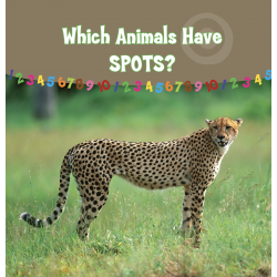 Which Animals Have  Spots?